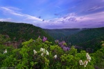 sunrise, pink, flower, harz, bodetal, morning, dawn, pastel, rosstrappe, germany, 2011, Germany, photo