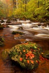 autumn, stream, forest, harz, national park, cascade, ilse, ilsenburg, Germany, photo