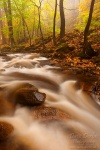 autumn, stream, forest, harz, fog, national park, trail, cascade, ilse, ilsenburg, photo