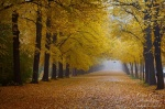 fall, autumn, park, road, foliage, leaves, germany, 2011, photo