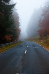 roadshot, fog, road, autumn, tree, woods, forest, germany, 2012, photo