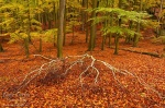 forest, autumn, woods, leaves, saxon switzerland, germany, 2011, photo