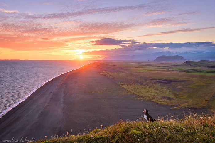 sunset, beach, coast, puffin, rugged, cliff, sun, iceland, 2016, photo