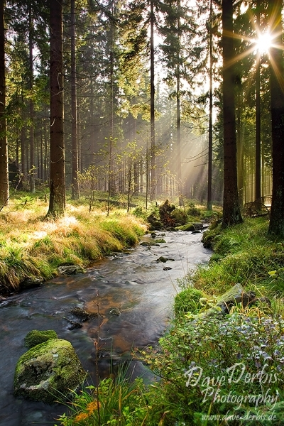 harz, bode, stream, bodetal, sunbeams, sachsen-anhalt, braunlage, summer, creek, cascade, national park, germany, photo
