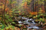 autumn, forest, foliage, stream, harz, valley, national parc, germany, photo