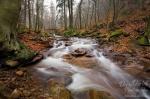 harz, autumn, fall, stream, ilse, ilsetal, sachsen-anhalt, ilsenburg, creek, national park, germany, photo