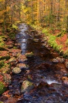 autumn, forest, stream, harz, germany, 2015, photo