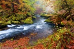 forest, valley, river, autumn, kamnitz, bohemian switzerland, czech republic, 2014, photo