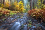 autumn, foliage, valley, forest, bohemian switzerland, czech republic, 2016, Latest Photos (Past one Year), photo