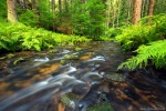 river, stream, summer, forest, bohemian switzerland, national park, czech republic, 2017, photo