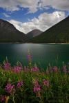 lake, wildflowers, moutain, alps, italy, 2012, Italy, photo