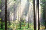harz, summer, trees, sunbeams, bodetal, sachsen-anhalt, braunlage, national park, germany, 2020, photo