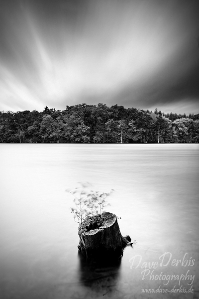 brumby, surreal, storm, lake, tree, stump, wind, stormy, high wind, striking, rare, beauty, germany, bnw, photo