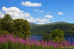 lake, wildflower, scotland, mountain, summer, flowers, photo