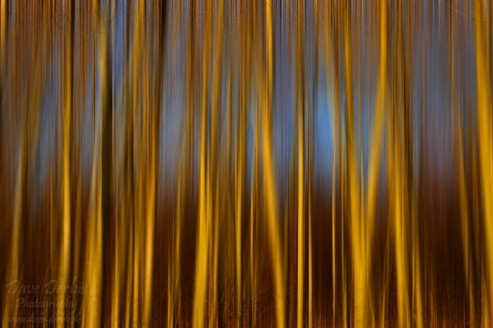sunset, abstract, tree, forest, leipzig, germany, 2013, photo