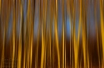 sunset, abstract, tree, forest, leipzig, germany, 2013, Abstract Forest Renditions, photo