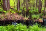 forest, baltic sea, trees, wild, bog, swamp, rain, germany, 2017, Stock Images Germany, photo