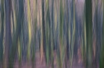forest, tree, batic sea, woods, abstract, germany, 2012, jasmund, nationalpark, national park, Best Landscape Photos of 2012, photo