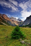 alpen, oytal, oberstorf, mountain, blue sky, clouds, fir tree, peaks, germany, photo
