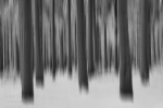 forest, abstract, woods, tree, snow, winter, germany, photo