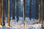 forest, sunrise, national park, sun, saxony, sachsen, germany, photo