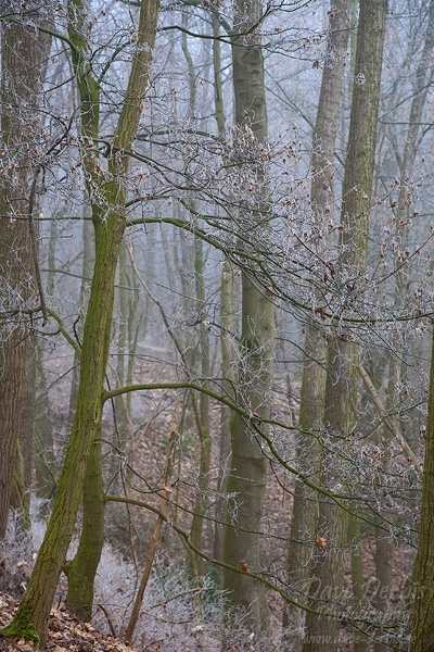 brumby, autumn, fog, forest, winter, november, germany, 2010, photo