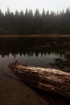 fog, harz, lake, tree, mirror, fir tree, germany, 2012, Autumn Season 2012, photo