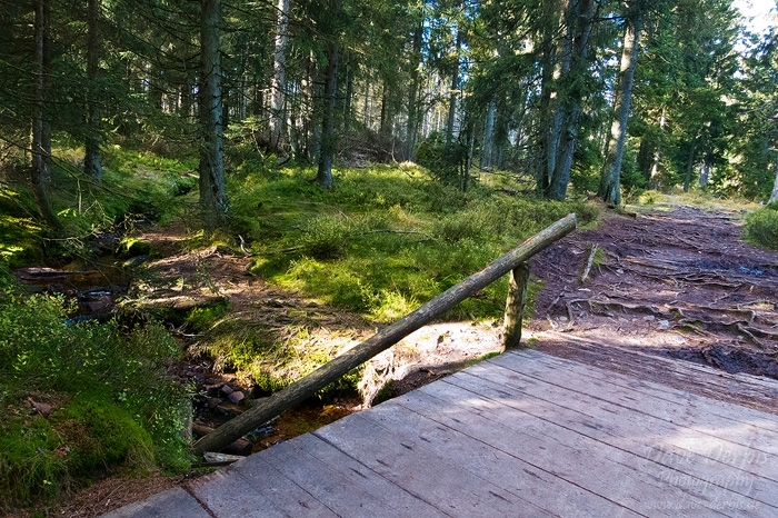 hiking, harz, oderteich, trail, tour, 2012, photo