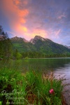 alpen, berchtesgaden, hintersee, sunset, lake, nationalpark, flooded, berg, schneebedeckt, blau, himmel, blue sky, mountain, forest, bayern, germany, photo