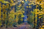 park, leipzig, autumn, forest, walk, trail, germany, 2012, Best Landscape Photos of 2012, photo