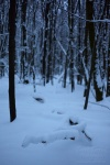snow, winter, forest, brumby, focus, cold, germany, 2013, photo