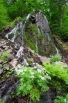 waterfall, stream, harz, summer, forest, germany, 2008, photo