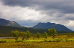 golden, mountain, highlands, tree, moor, scotland, 2014, Scotland, photo