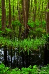 wild, forest, baltic sea, wood, swamp, germany, 2010, photo