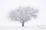 tree, cold, winter, snow,  white, schnee, biberach, baum, kalt, germany, photo