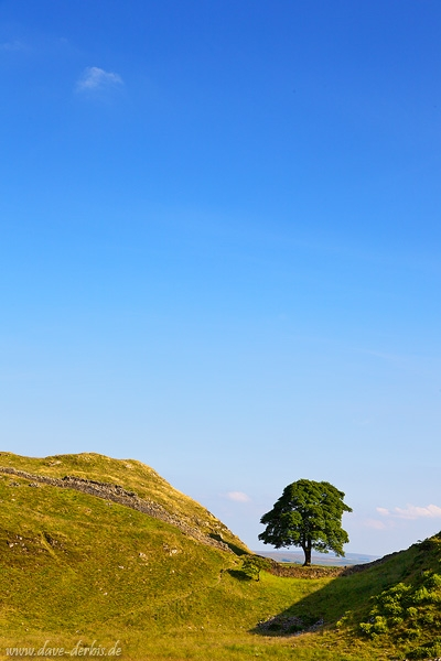 england, hadrians wall, tree, summer, 2014, photo