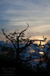 sunrise, harz, tree, national park, thale, germany, 2011, photo