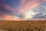 sunset, field, corn, sun, summer, leipzig, 2013, photo