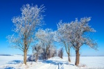 winter, brumby, rural, snow, blue sky, roadshot, germany, 2021, photo