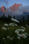 mountain, dolomites, sunset, flower, meadow, clouds, alpenglow, italy, 2011, photo
