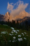 mountain, dolomites, sunset, flower, wildflower, meadow, clouds, alpenglow, italy, 2011, photo