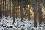 forest, sunrise, winter, sunbeams, saxon switzerland, germany, 2012, photo