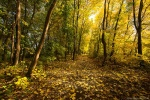 autumn, path, forest, golden, brumby, germany, 2015, Stock Images Germany, photo