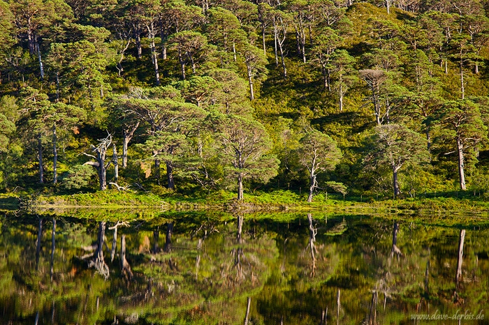lake, tree, reflection, mirror, forest, highlands, scotland, 2014, photo