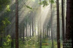 harz, summer, trees, sunbeams, bodetal, sachsen-anhalt, braunlage, national park, germany, photo