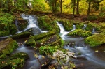 harz, autumn, forest, stream, harz, germany, 2012, photo