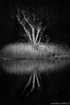 dead, lake, reflection, tree, bnw, germany, 2020, photo