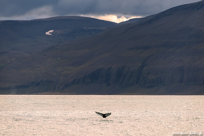 bay, ocean, coast, humpback, whale, dive, mountains, iceland, 2016, photo