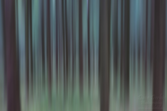 forest, abstract, harz, germany, photo