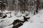 snow, winter, forest, fresh, harz, germany, 2010, photo